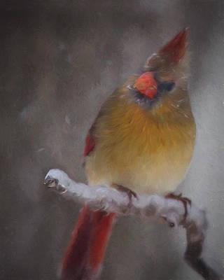 Photograph - Female Cardinal In The Winter by Lana Trussell