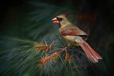 Photograph - Female Cardinal On Evergreen by TnBackroadsPhotos
