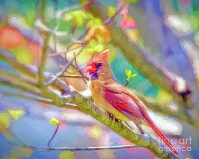 Photograph - Female Cardinal Sings by Kerri Farley