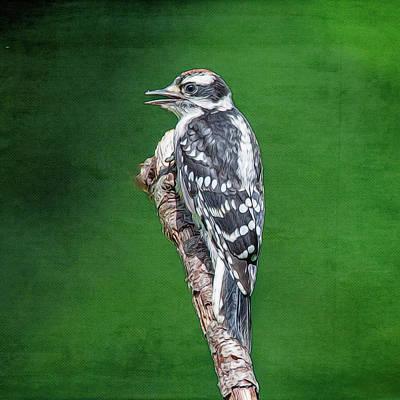 Photograph - Female Downy Woodpecker by Cathy Kovarik