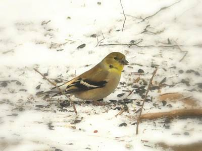Photograph - Female Goldfinch In Snow by Joe Duket