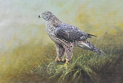 Painting - Female Goshawk Painitngs by Alan M Hunt
