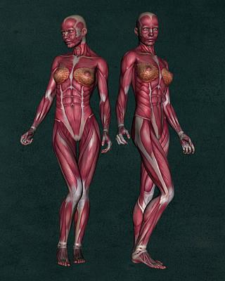 Female Human Anatomy 13 Art Print