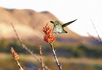 Photograph - Female Hummingbird And Ocotillo by Gregory Scott