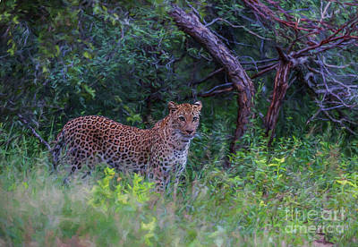 Digital Art - Female Leopard At First Light by Liz Leyden