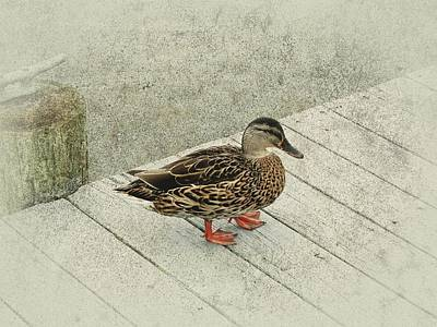 Photograph - Female Mallard Duck With Texture by Angie Tirado