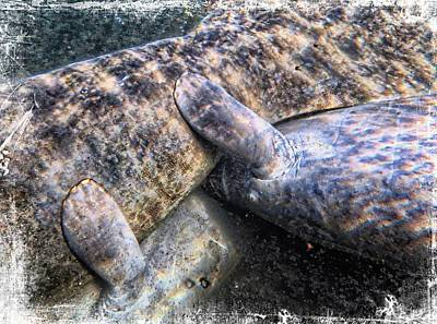 Photograph - Female Manatee With Twins by Sheri McLeroy