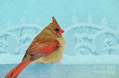 Photograph - Female Northern Cardinal In Winter by Janette Boyd