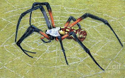 Fuqua - Artwork Drawing - Female Orb Spider -1 by Beverly Fuqua