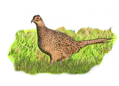 Digital Art - Female Pheasant In Grass by Yuichi Tanabe