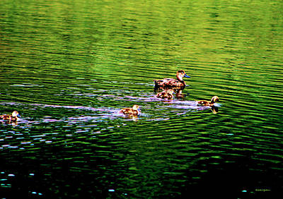 Photograph - Female Ruddy Duck With Ducklings by Dale E Jackson