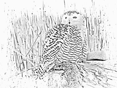Photograph - Female Snow Owl by Marcia Lee Jones