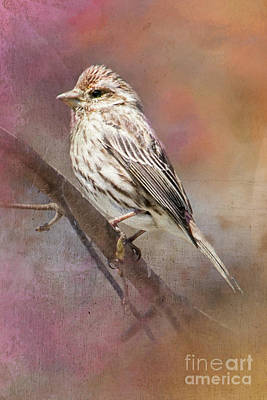 Female Sparrow On Branch Ginkelmier Inspired Art Print