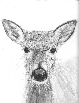 Female White-tailed Deer Art Print by Marqueta Graham