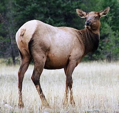Feme Elk Art Print by Tiffany Vest