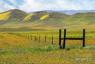 Photograph - Fence Along Soda Lake Road by Mimi Ditchie