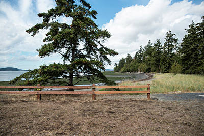 Photograph - Fence And Fir by Tom Cochran