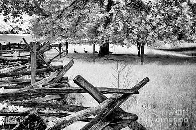 Photograph - Fence And Geese by Paul W Faust - Impressions of Light