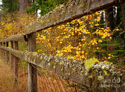 Photograph - Fence by Idaho Scenic Images Linda Lantzy