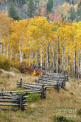 Photograph - Fence In Fall by Tibor Vari