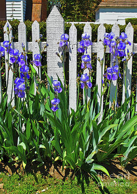 Photograph - Fence In Purple by George D Gordon III