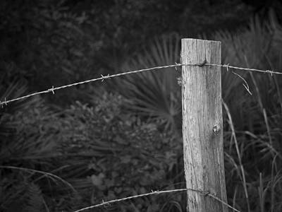 Photograph - Fence by Laurie Hasan
