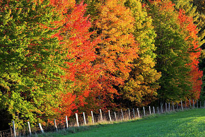 Photograph - Fence Line Foliage by Alan L Graham