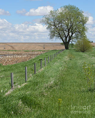 Photograph - Fence Line by Renie Rutten