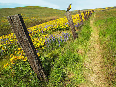 Wooden Fence Post Photograph - Fence Line Song by Angie Vogel