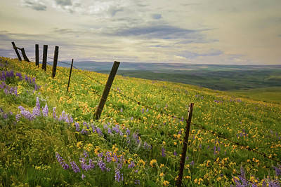 Photograph - Fence Line Wildflowers by Don Schwartz