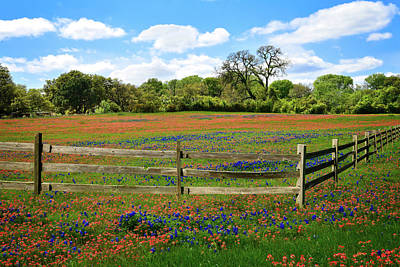 Photograph - Fence Lines And Wildflowers In The Hill Country by Lynn Bauer
