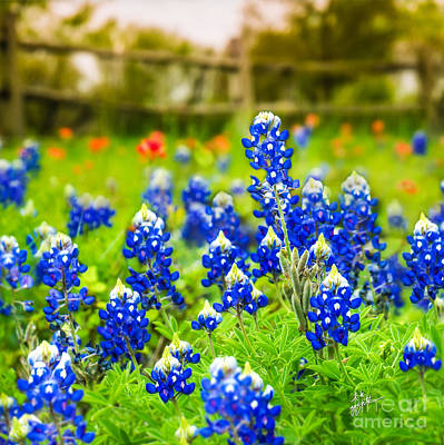 Photograph - Fence Me In With Flowers Squared  by TK Goforth