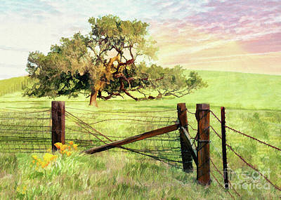 Photograph - Fence Oak by Sharon Foster