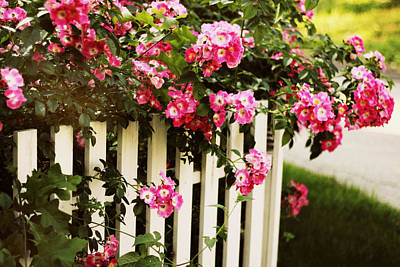 Picket Fence Flowers Photograph - Fence Post Floral by Jessica Jenney
