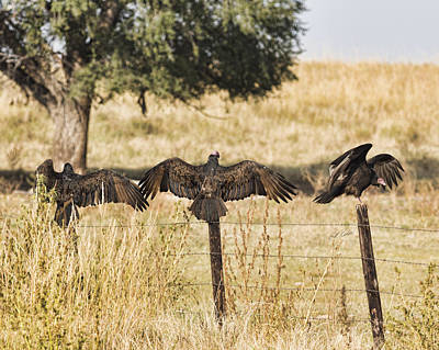 Art Print featuring the photograph Fence Post Vultures by Bill Kesler
