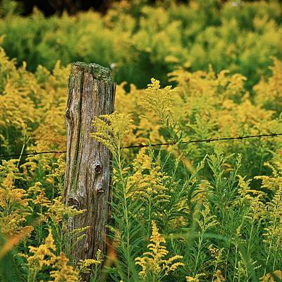 Fence Post7139 Art Print by Michael Peychich