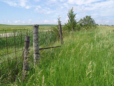 Photograph - Fence Row Iowa by Kevin Callahan