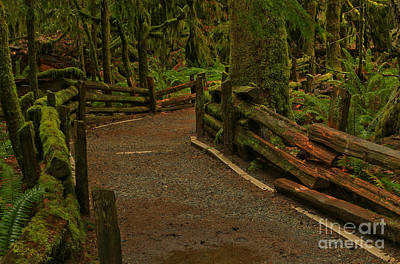 Fence Through The Forest Art Print by Adam Jewell