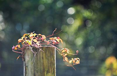 Photograph - Fence Topper - Fall by rd Erickson