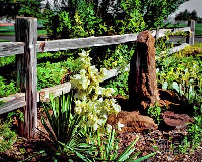 Photograph - Fence-yucca-rock by Jon Burch Photography