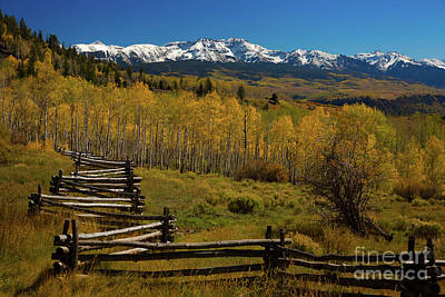 Photograph - Fenced Aspen by Doug Sturgess