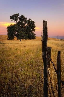 Photograph - Fenced In At Sunset by Marnie Patchett