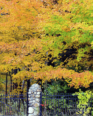 Photograph - Fenced In Color by Kathy DesJardins