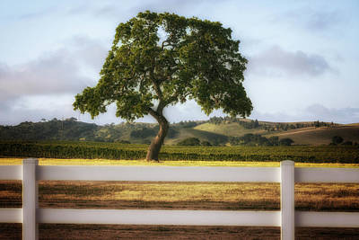 Photograph - Fenced In by Marnie Patchett