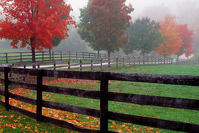 Contemplative Photograph - Fenceline And Wet Road, Autumn Color by Panoramic Images