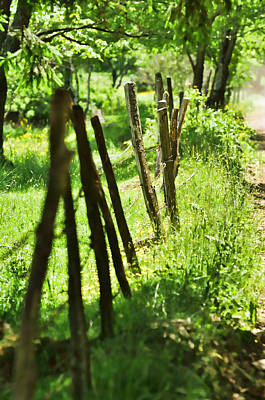 Photograph - Fenceline by JAMART Photography