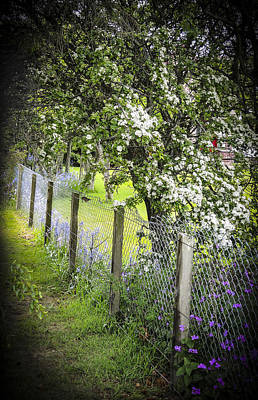 Photograph - Fenceline by Sally Ross