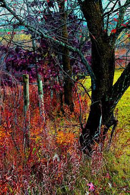 Photograph - Fenceline  Tree -  No. 1 -  Ver. 1 by William Meemken
