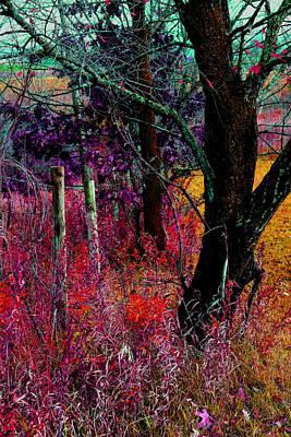 Photograph - Fenceline  Tree -  No. 1 -  Ver. 2 by William Meemken