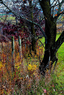 Photograph - Fenceline  Tree -  No. 1 by William Meemken
